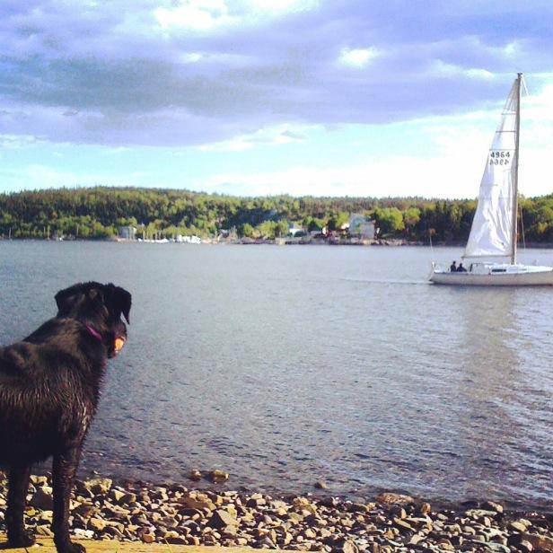 Point Pleasant Park Off-Leash Dog-Friendly