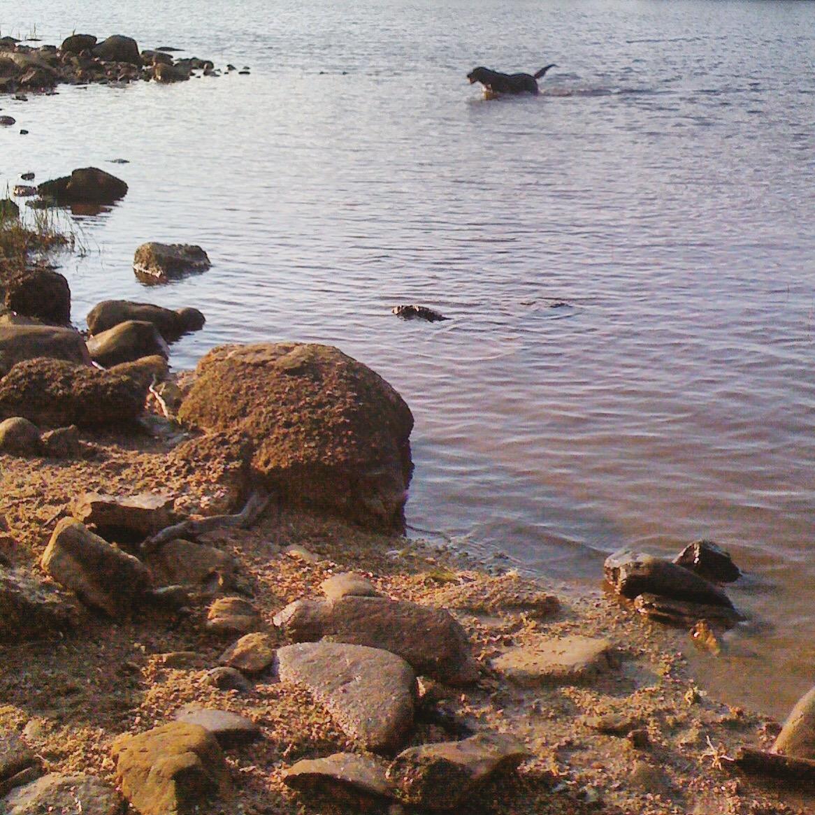 Long Lake off-leash dog-friendly