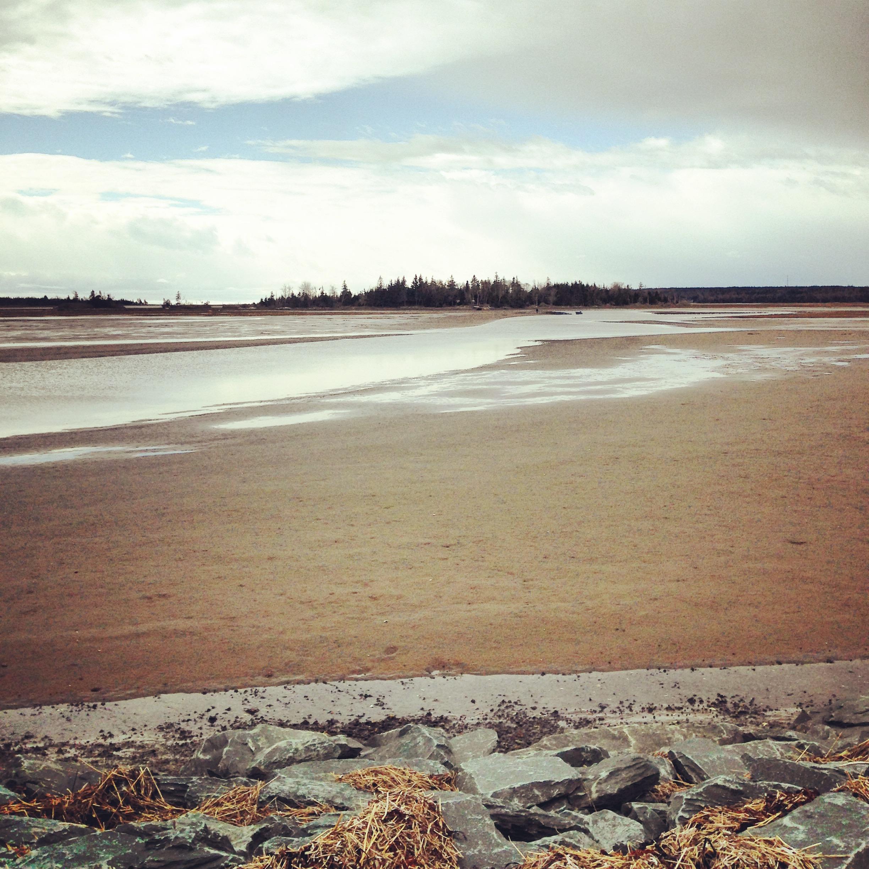 Salt Marsh Trail off-leash dog-friendly – Halifax Dogventures