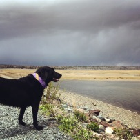 Salt Marsh Trail off-leash dog-friendly