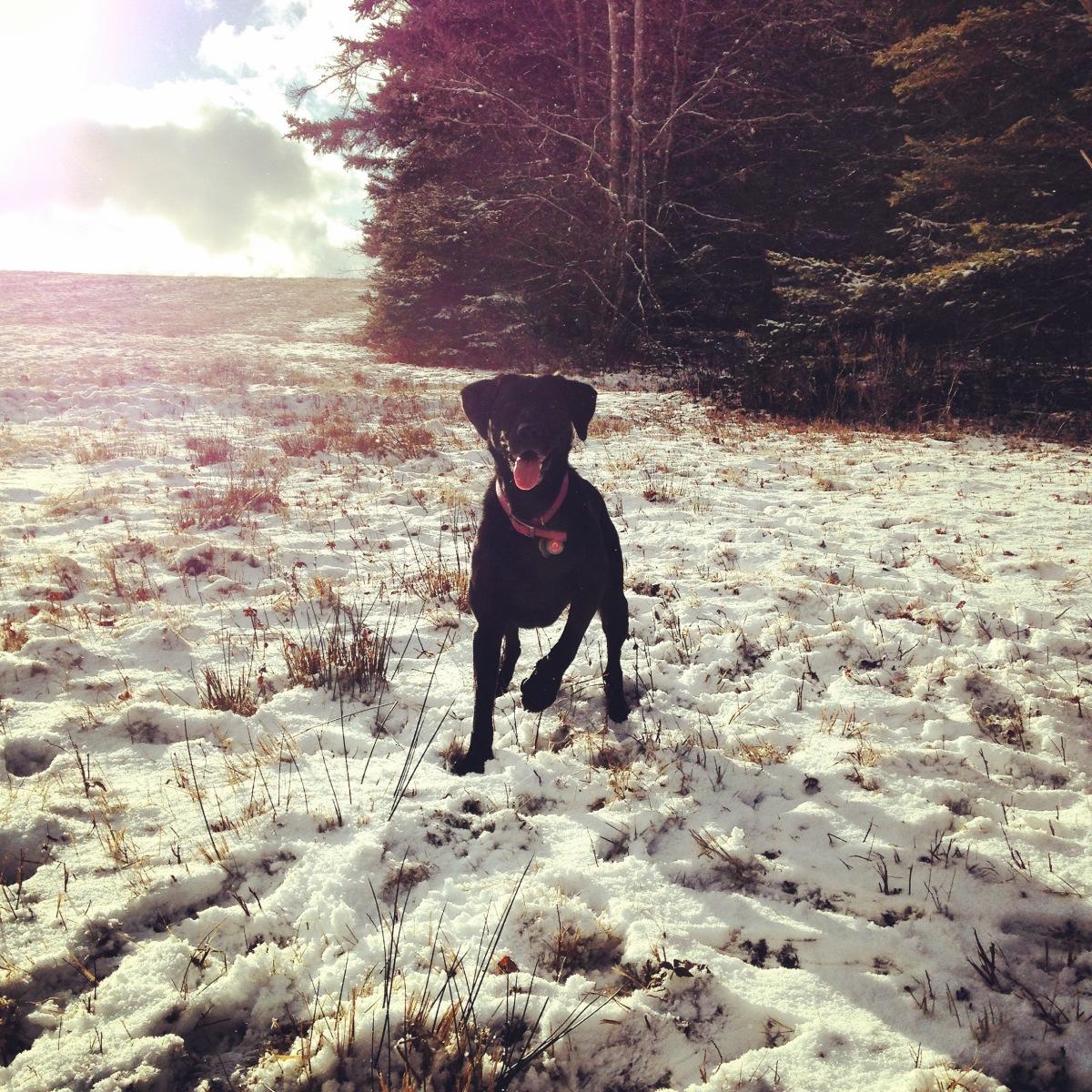 Cole Harbour Lawrencetown Coastal Heritage Park is dog-friendly