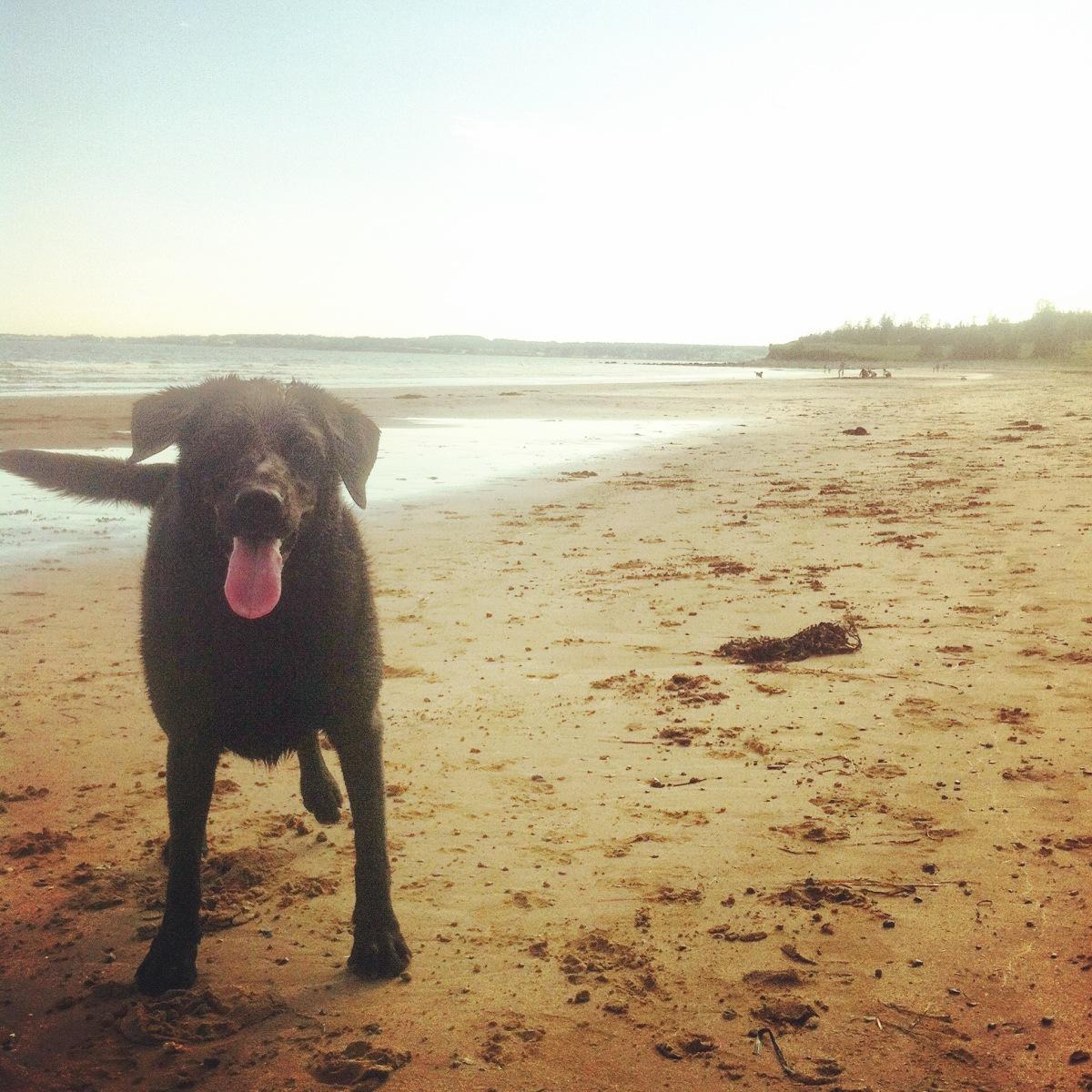 Conrad's Beach in Halifax, NS is our favourite beach for dog-friendly fun