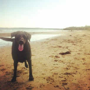 Conrad's Beach in Halifax, NS is our favourite beach for dog-friendly fun