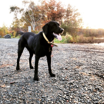 Morris Lake and Russell Lake trails in Dartmouth, NS are dog-friendly - it's a great place to take your dog swimming