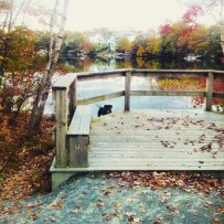 Morris Lake and Russell Lake trails in Dartmouth, NS are dog-friendly
