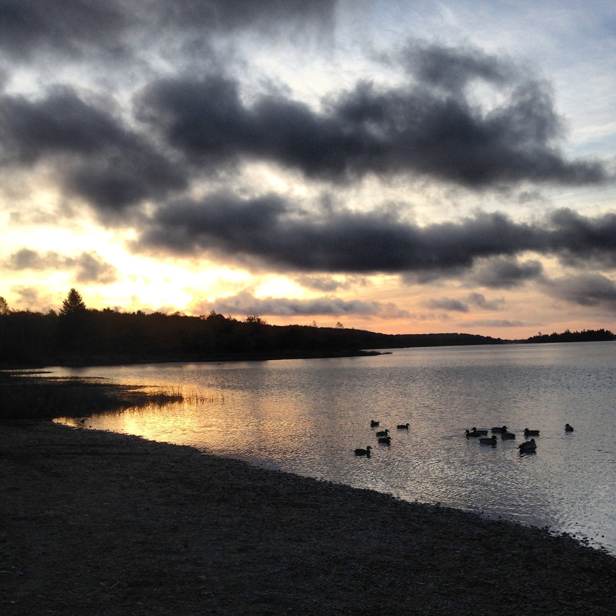 Morris Lake and Russell Lake in Dartmouth, NS are dog-friendly