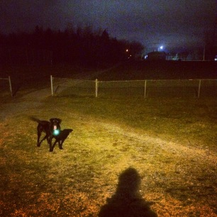 Mic Mac Sports Fields off-leash dog-friendly