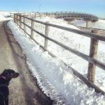 Dog at Shubie Park Dartmouth Crossing Entrance