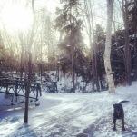 Off-Leash Dog at Shubie Park