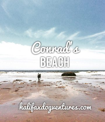 Conrad's Beach in Lawrencetown, Nova Scotia is Off-Leash Dog Friendly