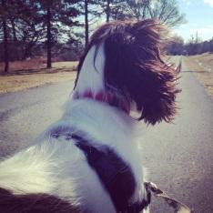 Fort Needham Memorial Park off-leash dog friendly