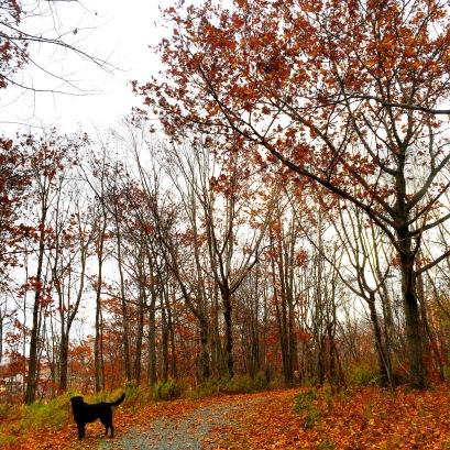 Graham's Grove Park with dog
