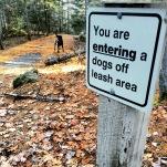 Hemlock Ravine Park off-leash dog friendly trail