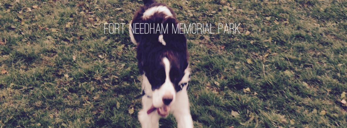 Dog at Fort Needham Park