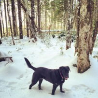 Spider Lake Trails in Dartmouth, NS off-leash dog friendly