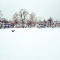 Halifax Common Off-Leash Dog-Friendly