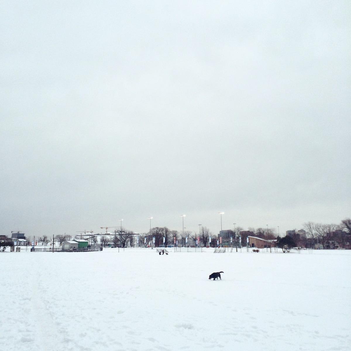 Halifax Common Off-Leash Dog
