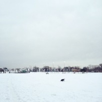 Halifax Common Off-Leash Dog
