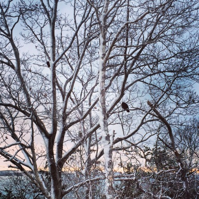 Birds in Trees at York Redoubt