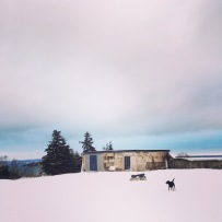 Off-Leash Dog at York Redoubt