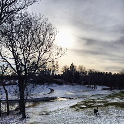 Dog at Ashburn Golf Club