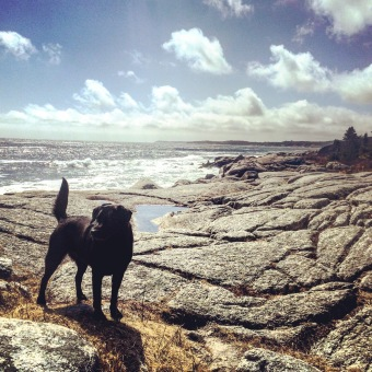 Herring Cove Provincial Park Reserve in Halifax, Nova Scotia