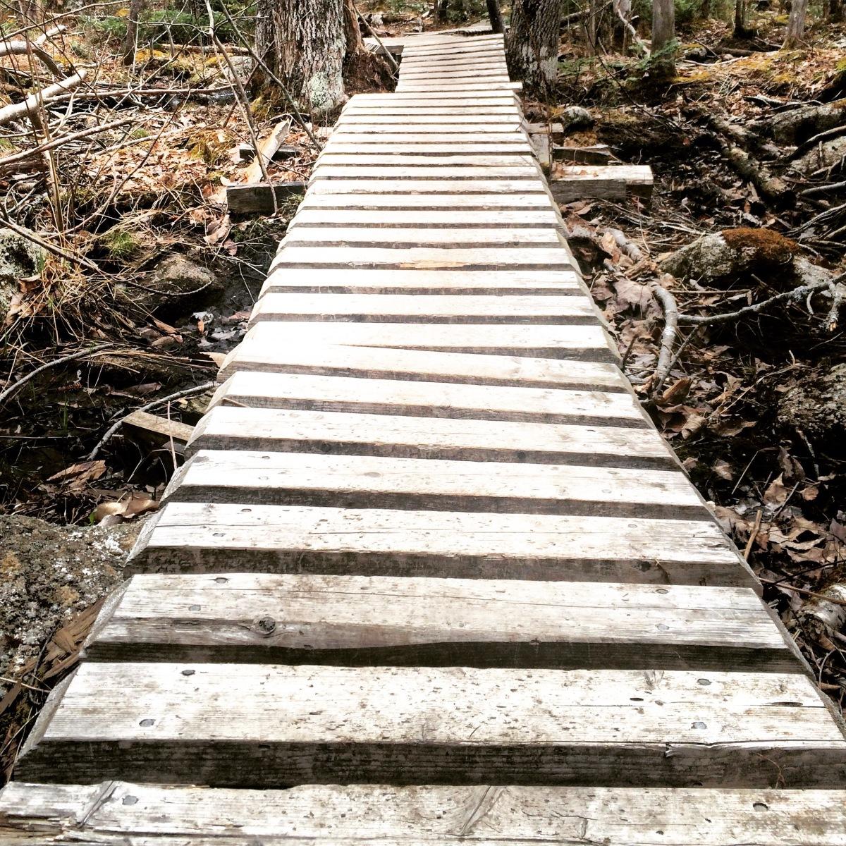 Long Lake Provincial Park new Lakeview Trail dog-friendly