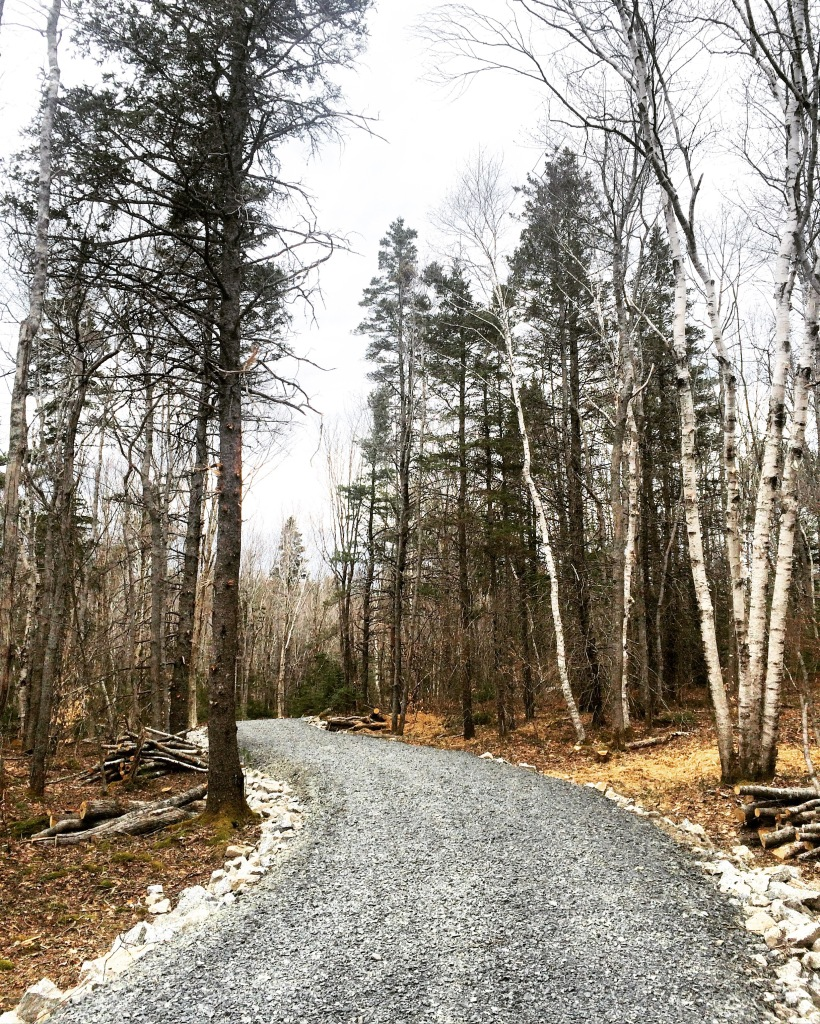 Long Lake Provincial Park new Lakeview Trail dog-friendly