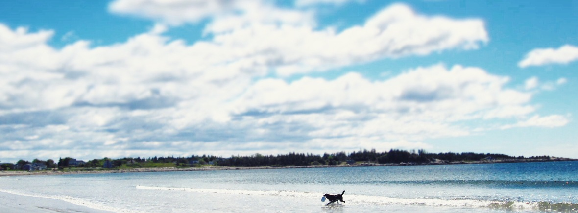 Crescent Beach in Lockeport, NS - a beautiful, dog-friendly beach