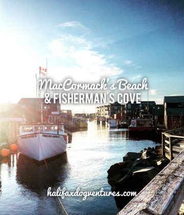 Enjoy a dog-friendly east coast experience at MacCormacks Beach in Eastern Passage, NS