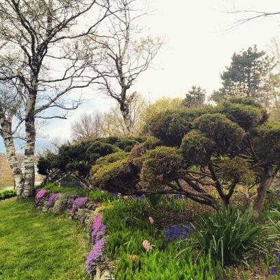 Dartmouth Common Dog-Friendly Off-Leash