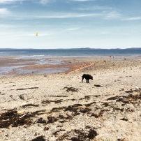 Dog-Friendly Adventures in Saint Andrews, New Brunswick