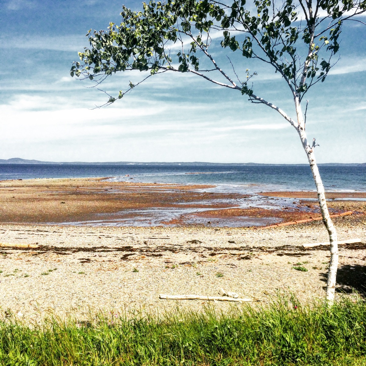 Dog-Friendly Adventures in Saint Andrews, New Brunswick