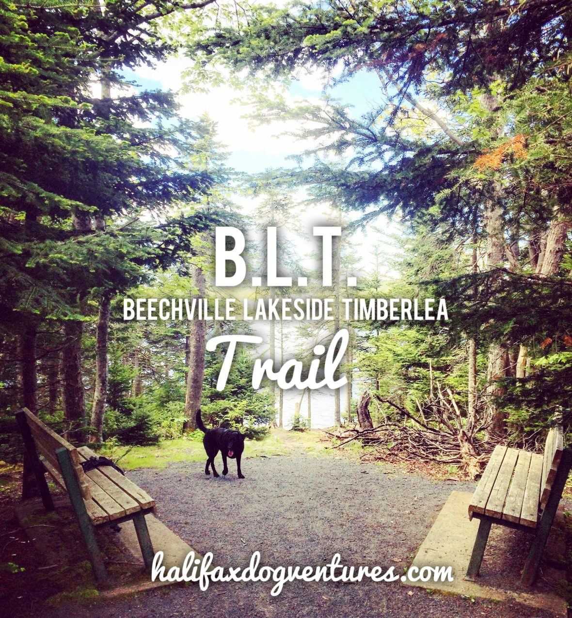 Beechville Lakeside Timberlea BLT Trail is dog-friendly! Its a great place to go jogging with your dog