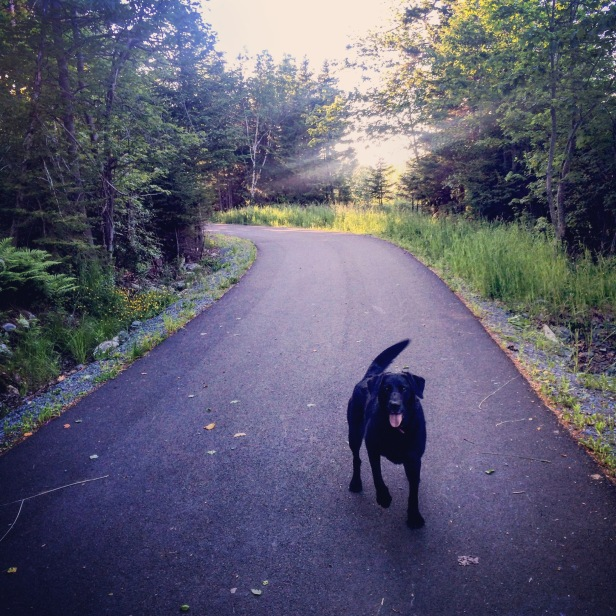 Cole Harbour Commons off-leash / fetch / dog-friendly?