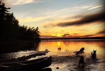 Backcountry Camping with Dogs in Kejimkujik National Park