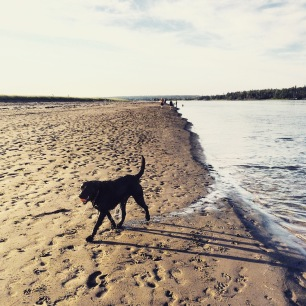 Rainbow Haven Beach in Cole Harbour, Nova Scotia Off-Leash Dog Friendly