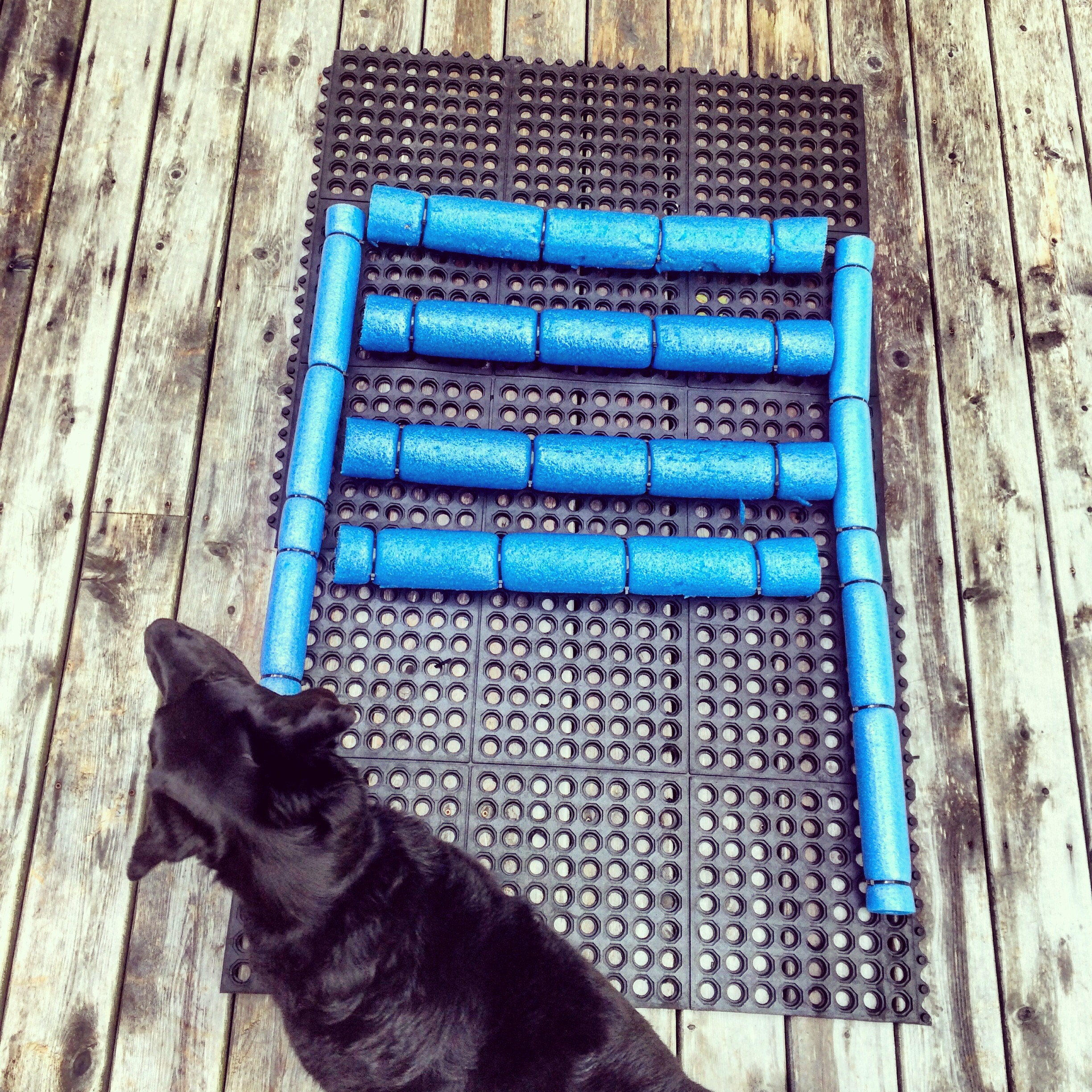 Diy Dock Amp Boat Ramp For Dogs Halifax Dogventures