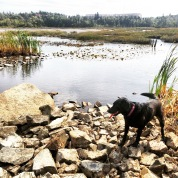 Belchers Marsh Park in Clayton Park, Halifax, Nova Scotia Off-Leash Dog Friendly