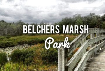 Belchers Marsh Park in Clayton Park, Halifax, Nova Scotia with Off-Leash Dog