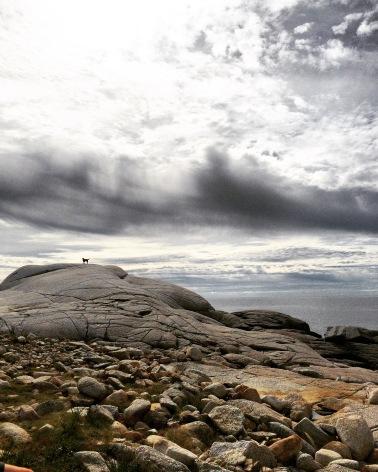 High Head Trail in Halifax / HRM with Off-Leash Dog