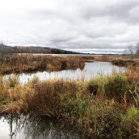 Bissett Lake Trail in Cole Harbour, Nova Scotia