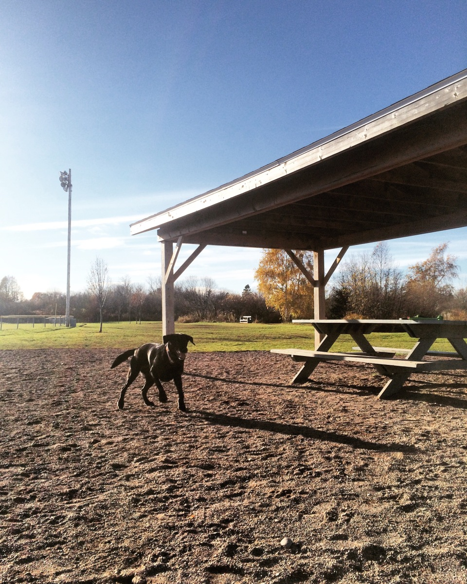Truro / Bible Hill Off-Leash Dog Park in Truro, Nova Scotia