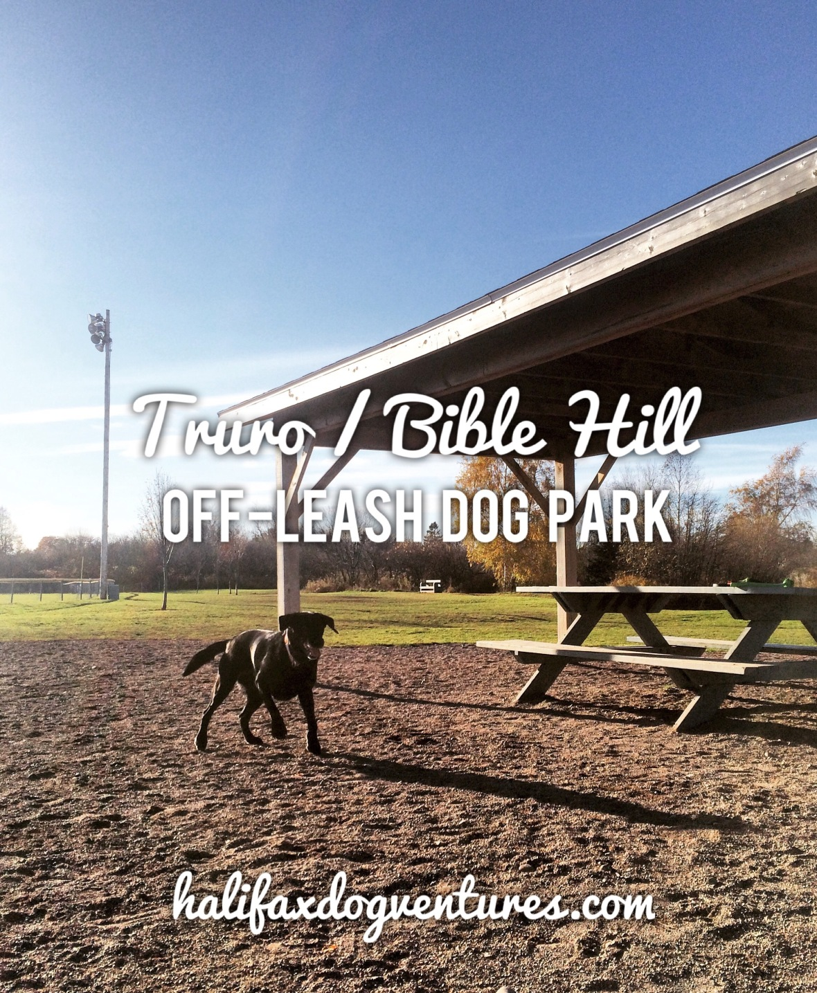 Truro / Bible Hill Off-Leash Dog Park in Truro, Nova Scotia